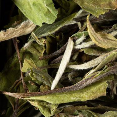 Thé de Chine - Paï Mu Tan Prenium